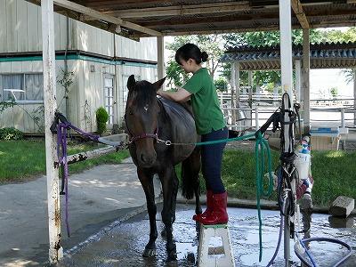 馬育ては自分育て。馬は鏡です。