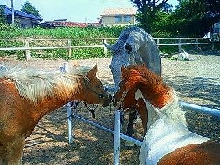 馬を愛する気持ち馬の言葉