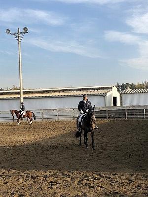 馬に思いやりを注ぐ馬術
