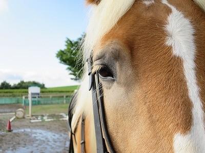 ウィッシュの馬はいい匂い