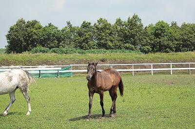 のんびりいい表情の馬