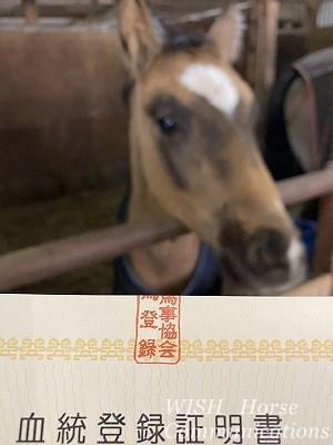 馬の血統登録証明書