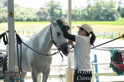 馬との愛情