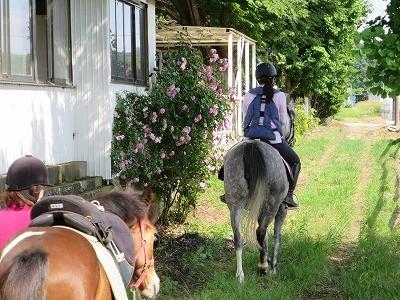 馬と一緒に楽しい外乗
