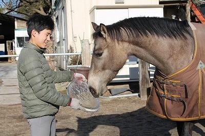 氷を舐める馬