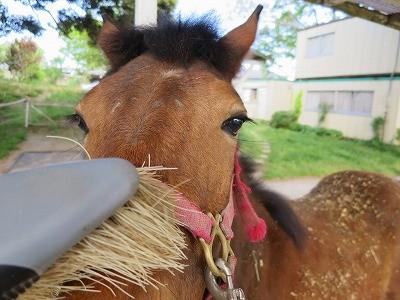 新馬調教 馬育ては小さな一歩の積み重ね