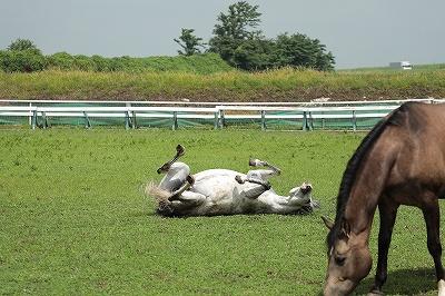 気持ち良く寝転ぶ馬