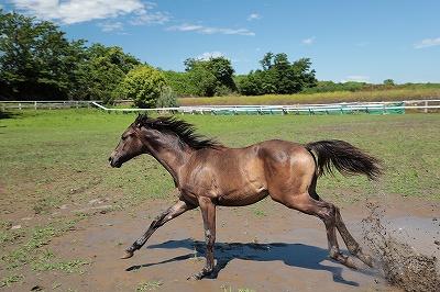 馬の成長記録