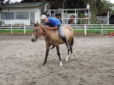 馬が人に寄せる信頼