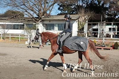 乗馬は馬がパートナー