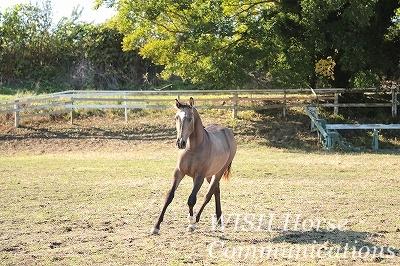 育てる乗馬