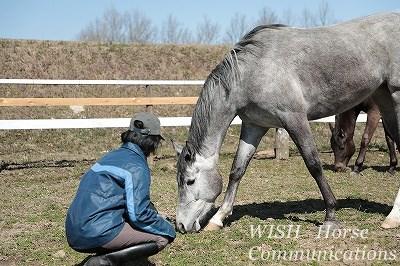 愛馬とともに