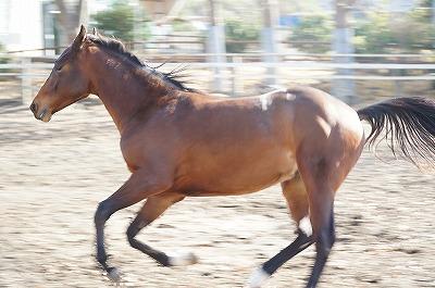 もし馬だったらどんな人に乗られたいか