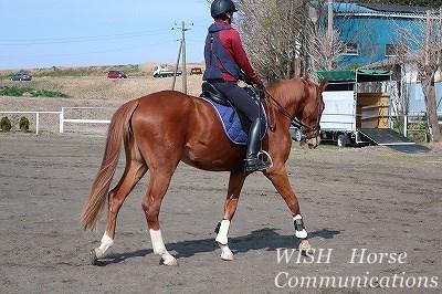 乗馬は馬との話し合い