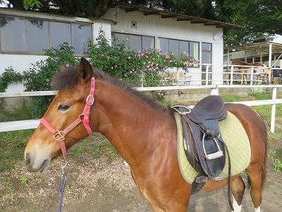新馬調教 馬を馬に育てる