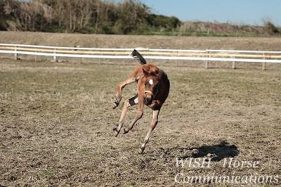 乗馬に育てる