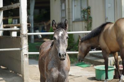 馬とアイコンタクトが大切