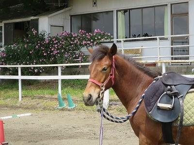 新馬調教 リラックスが大切