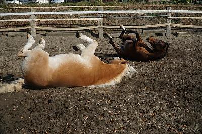 愛情を込めれば馬が応えてくれるのは自然なこと