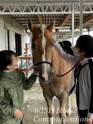 全日本馬場馬術大会2021
