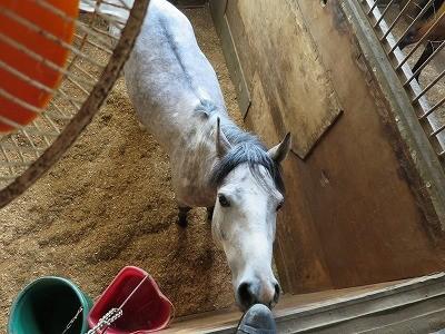 馬と扇風機