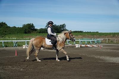 馬を穏やかにする調教