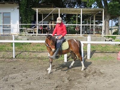 新馬調教 馬に納得してもらう努力