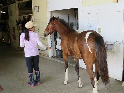 馬と気持ちが通じ合う
