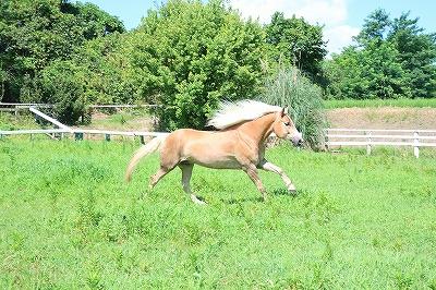 健康でよく調教された馬