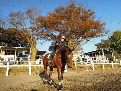 コミュニケーション乗馬を体験