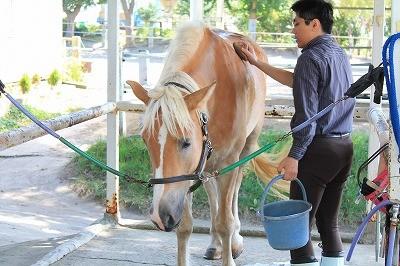 馬の半身浴