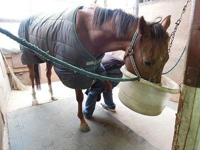 今日は装蹄&冬の乗馬服を着ました