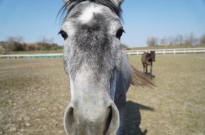 馬に学習してもらう