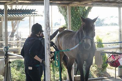 馬はちゃんとわかっています。どのくらいの情熱でやっているかを