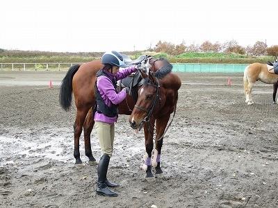 落ち着いていて人に気を許している馬