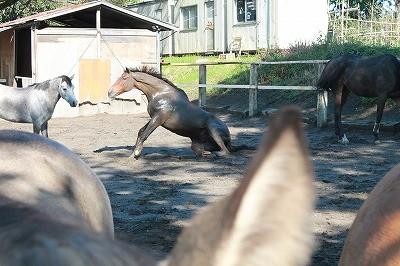 本来の馬の姿