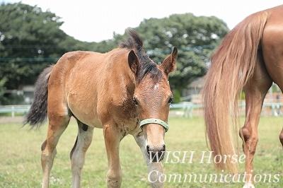 馬と仲良しの乗馬