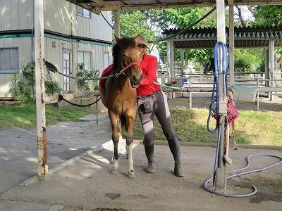新馬調教 重さを教える