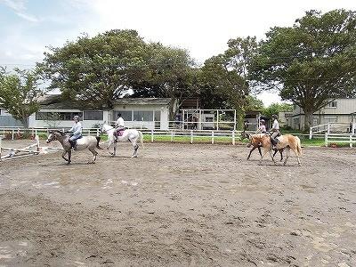乗馬のカドリール