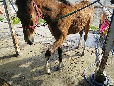 新馬調教 馬の理解を得る