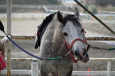 馬も一緒に楽しむ乗馬ができますように