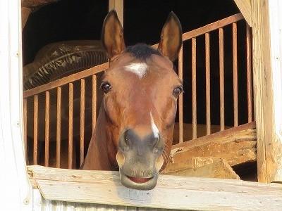 馬のお見送り