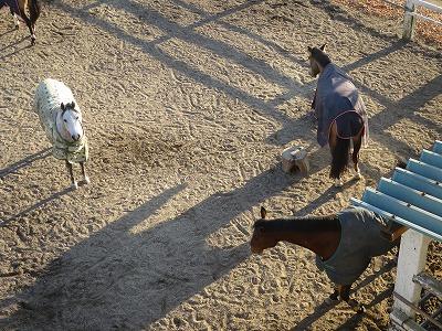 自由に遊ぶ馬達