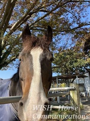 馬の日向ぼっこ