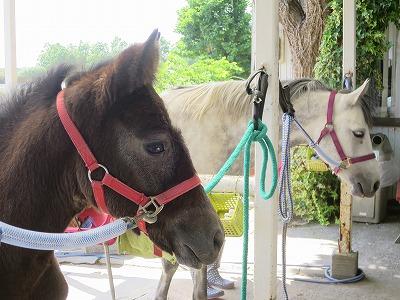 馬のためにひたすら勉強
