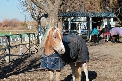 放牧している馬を眺めて