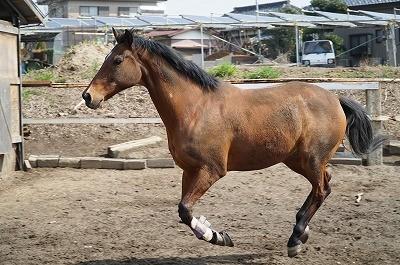 馬に報いる