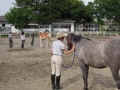 馬への話しかけ方