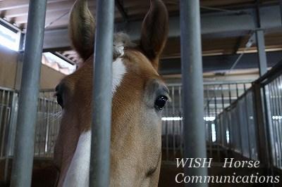 性格の可愛い馬は作れる!