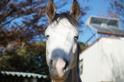 うっとりしてる馬の表情